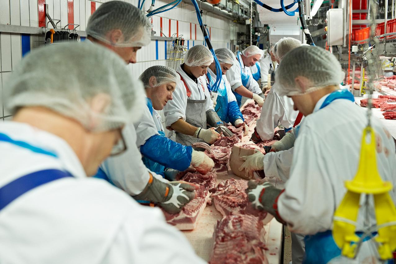 Schlachthof Vogler Fleisch LuckauSchlachthof der Firma Vogler Fleisch 29487 Luckau Ortsteil Steine, Wendland. Die angelieferten Tiere (hier Schweine) werden geschlachtet, ausgenommen und nach einer Nacht im Kühlhaus von polnischen Gastarbeitern zerlegt. Das Fleisch wird dann an die Kunden (z.B.Supermarktketten/Schlachtereien) geliefert. Jeder Mitarbeiter macht nur wenige Handgriffe, bevor er das Fleisch an seinen Kollegen weiterreicht. Hier wird im Gruppenakkord gearbeitet. Es zahlt die gesamt bearbeitete Menge Fleisch.